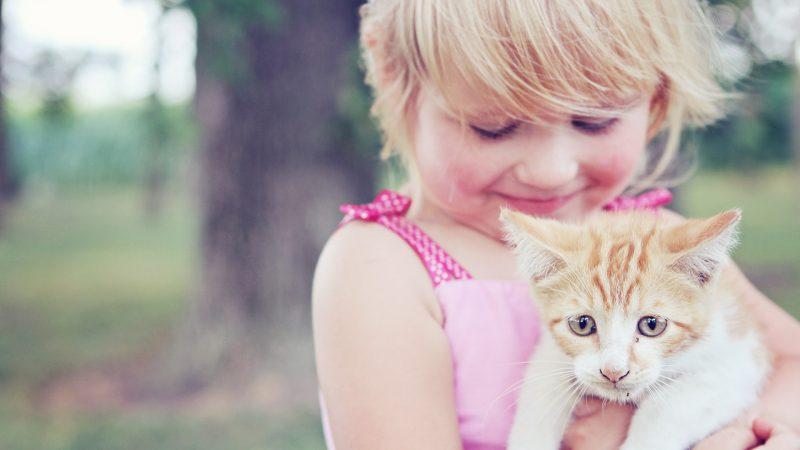 Comment réussir l'adoption d'un chaton avec un nouveau-né?